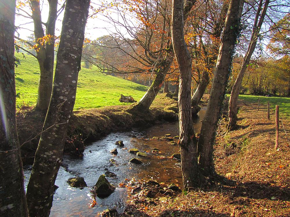 ruisseau de Maisoncelles-Gestion des Milieux Aquatiques